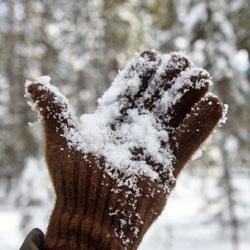Buffalo Gold Full Fingered Gloves