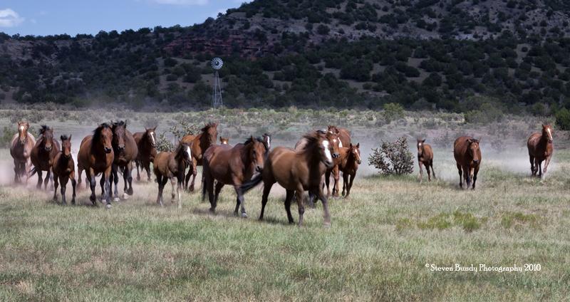 San Cristobal Ranch Horses