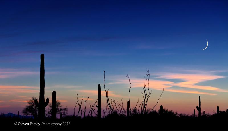 Saguaro Moon