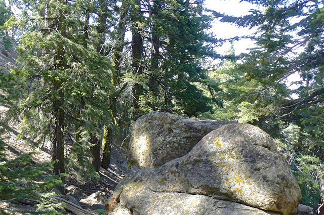 Pine Mountain forest