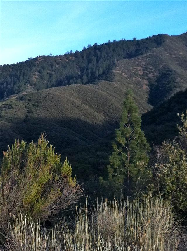 View of Nordhoff Ridge from Howard Creek Trail, Rose Valley Recreation Area