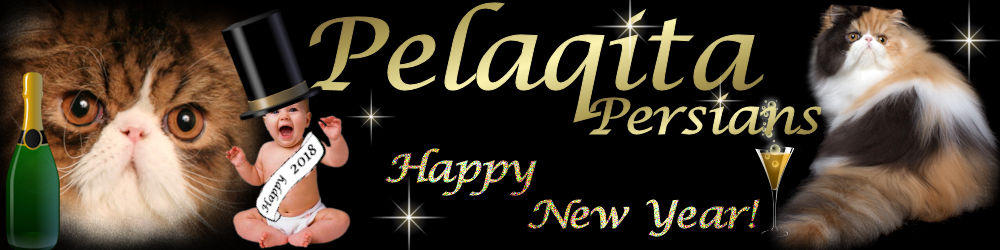 Pelaqita Persians Newsletter