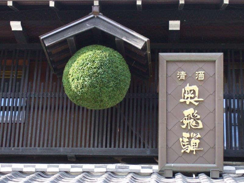 Sugidama - still green