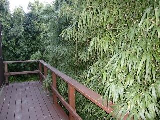 Bamboo grove hiding a small river