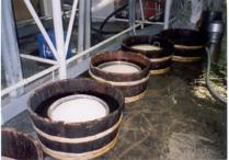 See sake brewing firsthand...