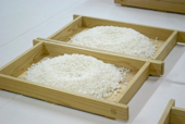 Koji in Trays