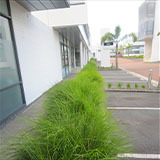 Photo Tour of Ozbreed Plants in New Zealand