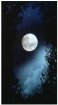ET Full Moon Walks