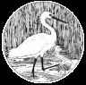 Snowy Egret Image
