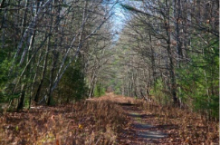 Image of a trail through the woods