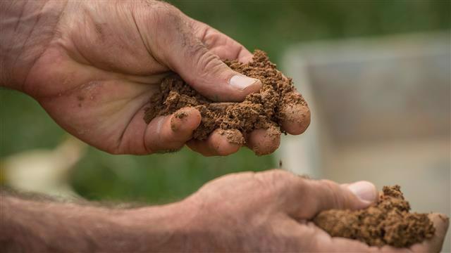 Hands feeling for soil moisture