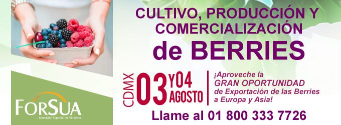 Cultivo, Produccion y Comercializacion de Berries